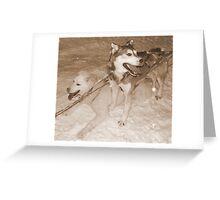 Husky Sledding at Night Greeting Card