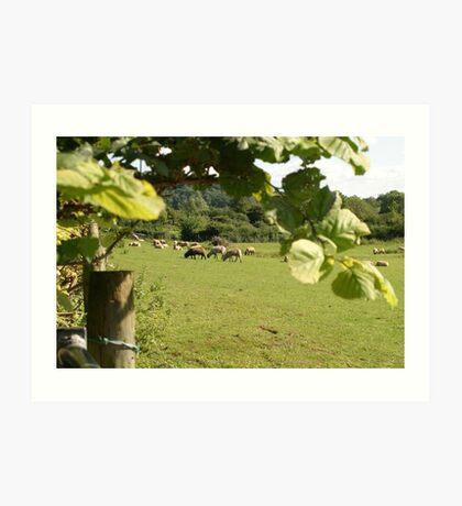 Rural farming Art Print