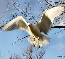 Spread Your Wings by Heather King