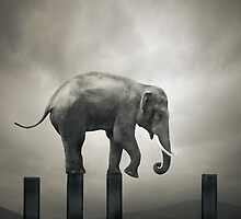 Last step by Alshain
