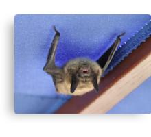 """Da Bat' Canvas Print"