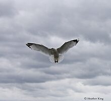 Freedom by Heather King