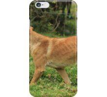 Dog in a Field iPhone Case/Skin