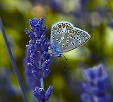 Blue Butterfly by Denise Abé