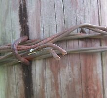 Wooden Barbed Wire  by swannonthefarm