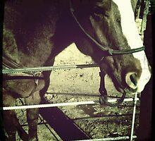 Horse At Grand Canyon Ranch by Sarah Louise English