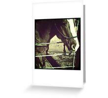 Horse At Grand Canyon Ranch Greeting Card