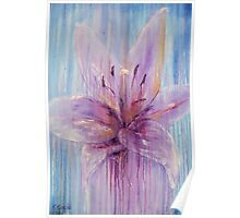 Lily Flower in Purple Poster