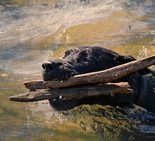 Two Sticks Are Just Better by Lacey 'Tak' Ewald