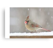 Female cardinal in the snow Canvas Print
