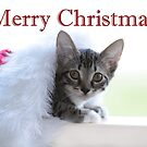 Christmas Kitten - Holiday card by Ella Hall