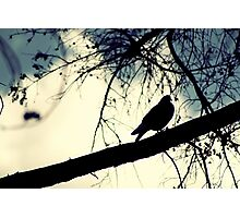 Pigeon on the tree Photographic Print