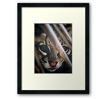 wildcat profile Framed Print