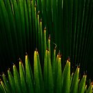 GROWING GREEN by Barbara Morrison