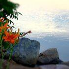 Waterside Lilies by Carrie Blackwood
