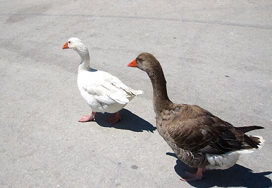 2 Little Ducks Out for a Stroll down the Street by Honor Kyne