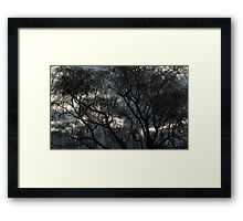 Winter Willow Framed Print