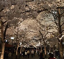 Gion Sakura Matsuri by Cahl Schroedl