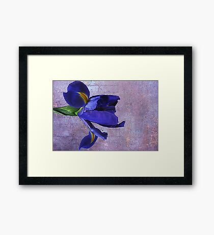 Lovely Lady Iris Framed Print