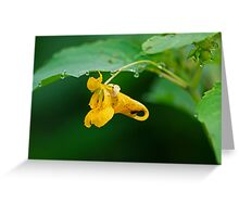 Touch Me Not Dropped with Dew Greeting Card