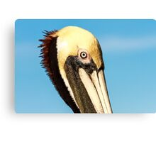 Brown Pelican Profile Canvas Print