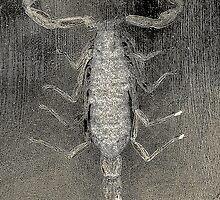 Manchurian Scorpion by Steve  Woodman