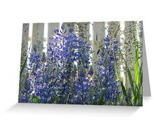 Sunlit Lupins Greeting Card