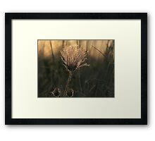 Shining! Framed Print