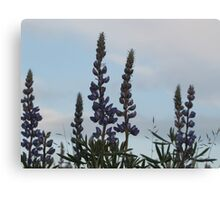 Lupin Sky Canvas Print