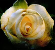 The Dirty Yellow Rose by Scott Mitchell