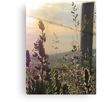 Fenced Lupins Canvas Print