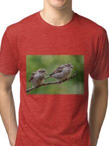 Fledgling house sparrows Tri-blend T-Shirt