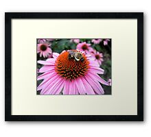 Cute Little Bumble v1 Framed Print