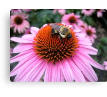 Cute Little Bumble v1 Canvas Print