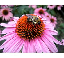 Cute Little Bumble v1 Photographic Print