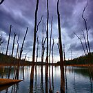 The Sticks  - Wellington National Park- Collie WEST AUSTRALIA by Chris Paddick