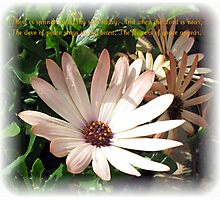 The Flowers of Grace Photographic Print