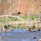 wings and wading by gene mcfarland