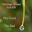 Banner for Winner Rain by Eve Parry