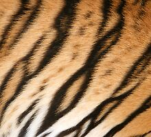 Hide of the Tiger Cub, Thailand  by Carole-Anne