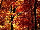 Ozark Autumn by NatureGreeting Cards ©ccwri