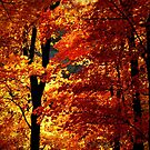 Ozark Autumn by NatureGreeting Cards ccwri