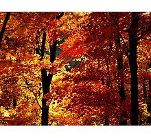 Ozark Autumn Photographic Print