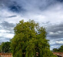 A Willow tree on the River Avon by Mark Johnson