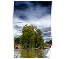 A Willow tree on the River Avon Poster