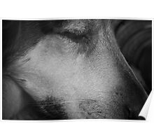 A dog sleeping in black and white Poster