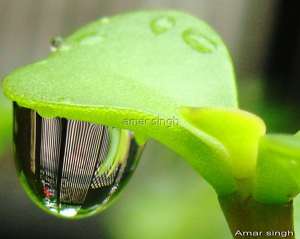 Reflection in Water droplet  by amar singh