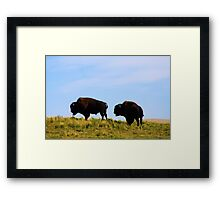 Wild Buffalo Framed Print