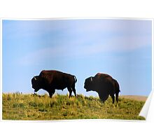 Wild Buffalo Poster