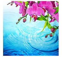tropical paradise,zen,peace,orchid,blue water,yoga,meditation, healing by Healinglove